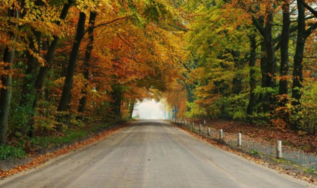 Herfst-Hoge-Veluwe